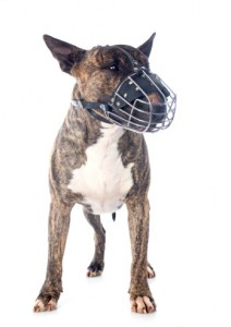 dog bite lawyers in binghamton ny
