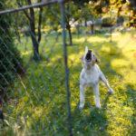 dog-bite-insurance-claims
